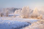Amazing Winter Landscape. Trees And Plants With Hoarfrost On Snowy Meadow In Clear Morning. Christma poster