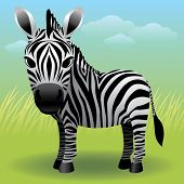 picture of baby animal  - Baby Animal collection: Zebra