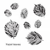 Set Of Vector Leaf Imprints. Collection Of Black Leaves Imprints On Transparent Background. Grunge L poster