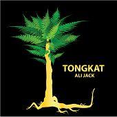 foto of libido  - Tongkat Ali  - JPG