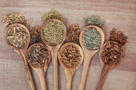 pic of irish moss  - Herb selection for alternative health remedies in olive wood spoons over papyrus background - JPG