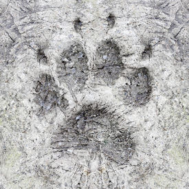 pic of mud pack  - The Wolf Track in a frozen ground - JPG