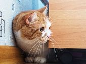 stock photo of animal cruelty  - Portrait of yellow scared cat hiding at home - JPG