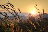 stock photo of pampas grass  - pampas grass rim light mountain landscape background  - JPG