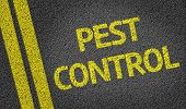 foto of pesticide  - Pest Control written on the road - JPG