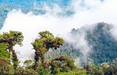 picture of rainforest  - From Andes to Amazon View of the tropical rainforest Ecuador