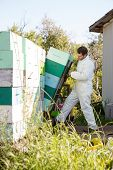 image of bee keeping  - Full length young male beekeeper loading stacked honeycomb crates in truck - JPG