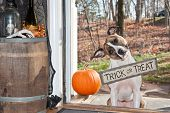 pic of begging dog  - A cute dog Trick or Treating on Halloween - JPG