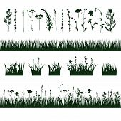 image of biodiversity  - silhouettes meadow grass and twigs of plants - JPG
