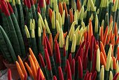 stock photo of sansevieria  - Sansevieria cylindrical painted in red - JPG