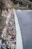 foto of gutter  - Dead leaves that have fallen into a street side gutter - JPG