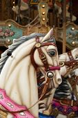 foto of paint horse  - White horse in a carousel at the fair - JPG