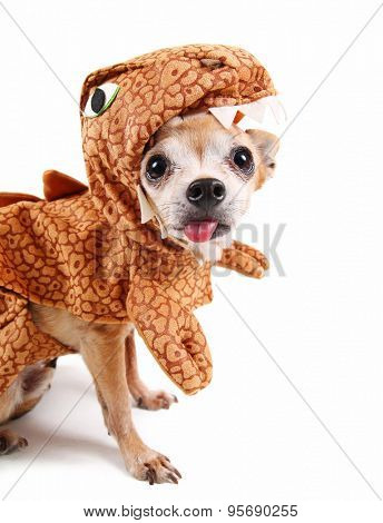 a cute chihuahua in a dinosaur costume sticking his tongue out at the camera isolated on  sc 1 st  PrintMePoster.com & a cute chihuahua in a dinosaur costume sticking his tongue out at ...