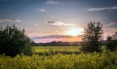 picture of rape-field  - Sunset and idyllic country landscape with field of yellow rape - JPG