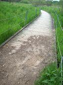 foto of wetland  - A wood boardwalk through the green wetland - JPG