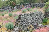 foto of stone house  - Ruins of an old lava stone house and typical vegetation of Mount Etna - JPG