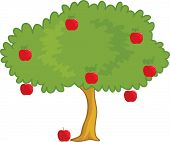 stock photo of apple tree  - an illustration of a apple tree - JPG