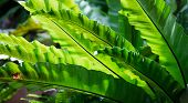 stock photo of chloroplast  - Macro of green leaves - JPG
