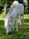 image of workhorses  - cute pony - JPG