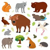 Animal Vector Animalistic Character In Forest Squirrel Wolf Bear Hare Of Wildlife Illustration Set O poster