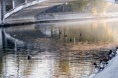 Morning City Park. Ducks Swim In The Pond Of The City Park. Autumn Park. Peace And Quiet In The Morn poster