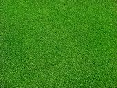 Green grass on golf course