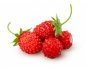 Wild Strawberry Isolated On White Background, Clipping Path, Full Depth Of Field poster