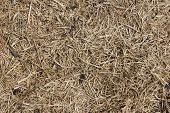 Dry Straw Texture, Dirty Straw Background, , Dirty Straw Texture poster