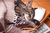 A Small Kitty Covered With A Blanket Sleeping Near A Computer Mouse. Break In Work poster