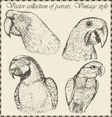 vector set: birds - variety of vintage bird illustrations