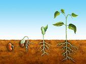 Постер, плакат: Прорастание семян