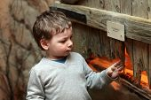 picture of terrarium  - Boy watching the insect in terrarium at zoo  - JPG
