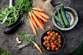 stock photo of rocket salad  - Fresh organic vegetables - JPG