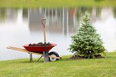 picture of manicured lawn  - Planting an ornamental evergreen cypress or conifer on the bank of a tranquil lake with a wheelbarrow full of potting soil or manure and a spade standing on the manicured lawn - JPG