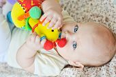 foto of teething baby  - a sweet baby is  biting a toy - JPG