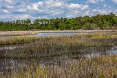 stock photo of marsh grass  - swamp and marsh grassed in the tidewater area near Swansboro, North Carolina