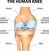 stock photo of knee  - Human anatomy - JPG