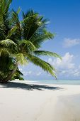 pic of kuramathi  - Green tree on white sand beach - JPG