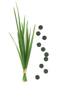 picture of chlorella  - Chlorella tablets and wheat grass over white background - JPG