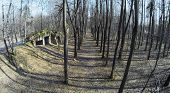 pic of ashes  - Old ashes near playground in forest at sunny spring day - JPG