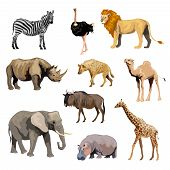 image of african lion  - Wild african animals set with zebra ostrich lion rhinoceros isolated vector illustration - JPG