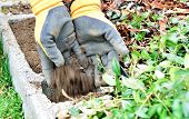 stock photo of concrete pouring  - Pour the soil from two hands to the concrete flower box - JPG
