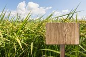 picture of farm land  - Blank wooden sign on field of paddy farm - JPG