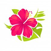 picture of hibiscus  - Hibiscus flower and palm leaves - JPG