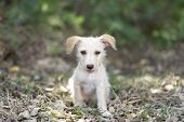 picture of cute puppy  - A cute happy adorable puppy is sitting in the forset sticking his tongue out - JPG