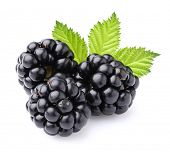 picture of blackberries  - Blackberry with leaves - JPG