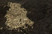 stock photo of excrement  - Compost Cow manure with straw background image - JPG