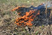 Grass Burning. Burning Grass Releases More Nitrogen Pollution Than Burning Wood poster