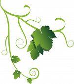 Постер, плакат: Виноградной лозы