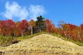 image of sakhalin  - Autumn landscape - a bright wood in mountain on breakaway. Island Sakhalin.   ** Note: Slight blurriness, best at smaller sizes - JPG